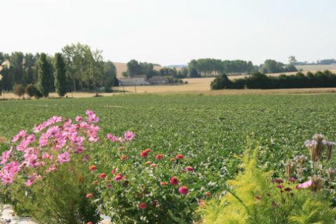 champs de melons